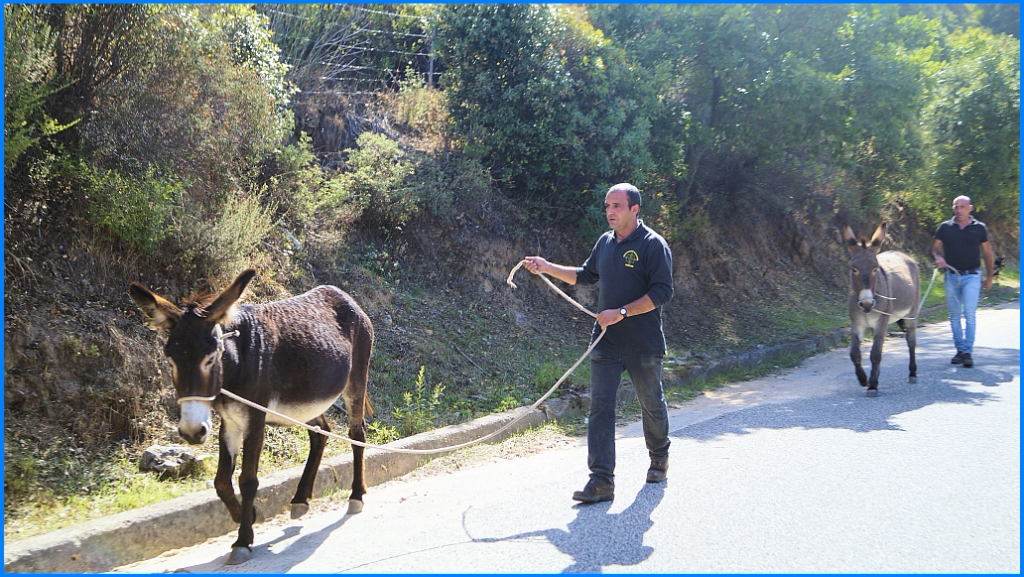 Reisecruiser.de auf Sardinien